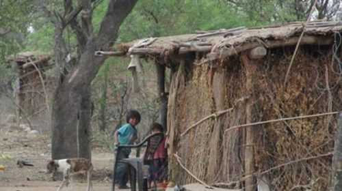 Para Greenpeace, la deforestación y el agronegocio son las principales causas de la desnutrición de los niños wichí