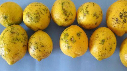 Cancelan por lo que resta de 2020 envíos a UE de limones tucumanos